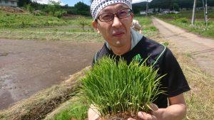 福島県福島市で日本酒「金水晶」の田植え