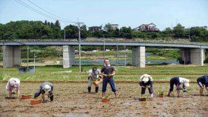 福島県二本松で田植え
